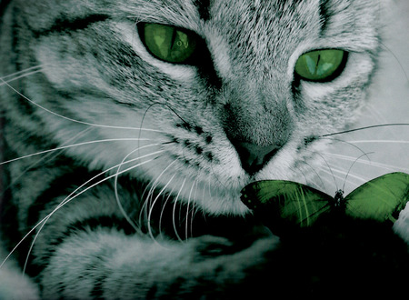 Tabby cat closeup with green butterfly