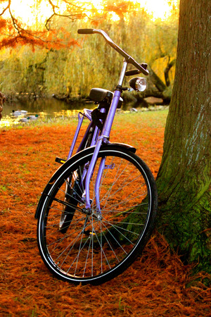 oma: Bicycle in park, fall day in Vondelpark Amsterdam