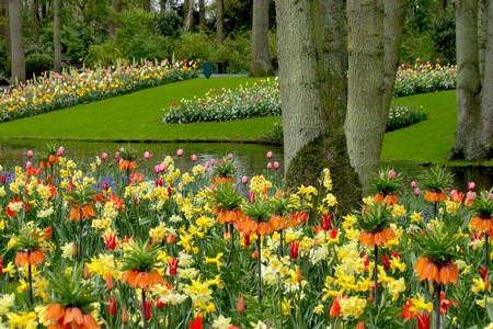 tulips in green grass: flower bed design