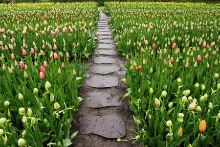 stone path: Stone path in garden
