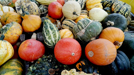colorful pumpkins and gourds 版權商用圖片