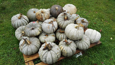 heap: pile of pumpkins white and blue
