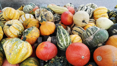 colorful pumpkins and gourds for halloween or thanksgiving 版權商用圖片