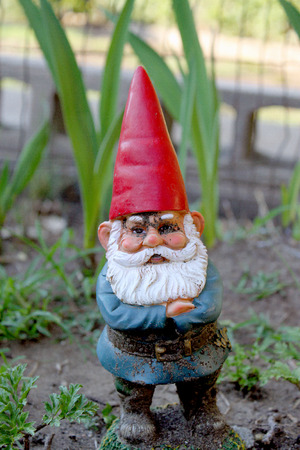 garden gnome guarding plants in garden with red hat and white beard with a blue coat