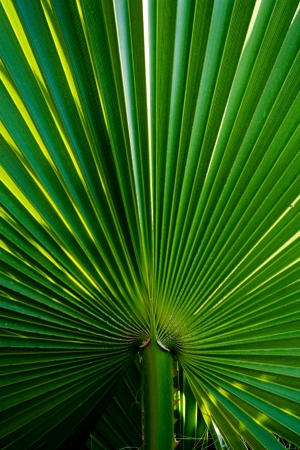 part of the palm leaf close-up shot photo