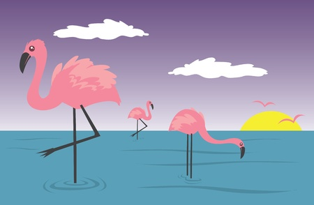 Flamingos in the water with sunset in the background.