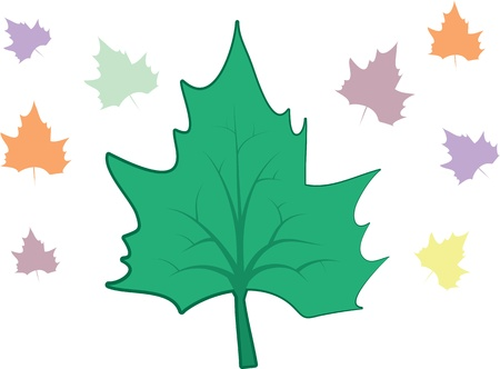 changing colors: Large leaf and multicolored leaves in the background.