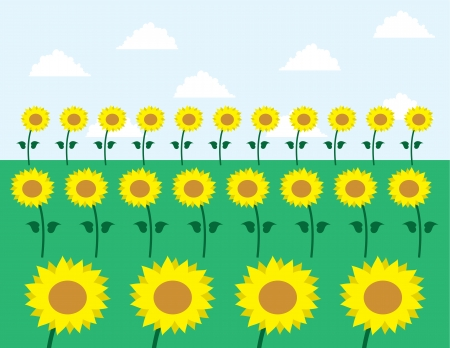 Sunflowers in grassy field   Stock Vector - 14062484