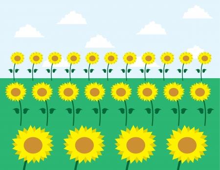 grassy: Sunflowers in grassy field
