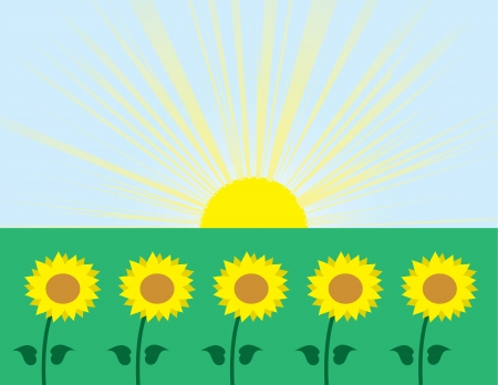 Sunflowers in grassy field with a sunburst background