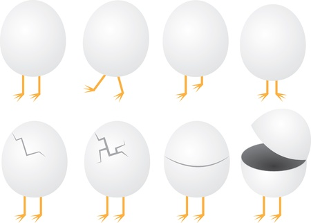 Eggs shells with feet sticking out Stock Vector - 14953800