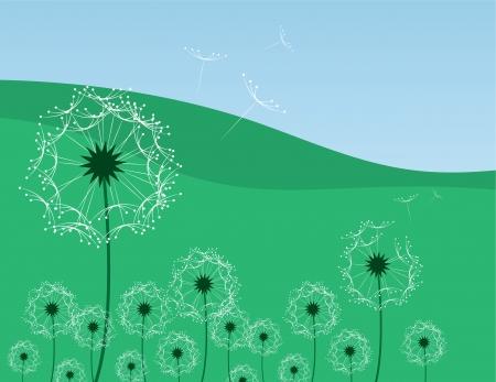 Dandelion flowers blowing in a grassy field  Illustration