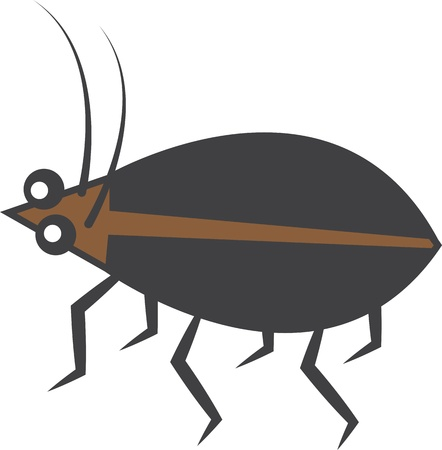 Isolated brown and black beetle