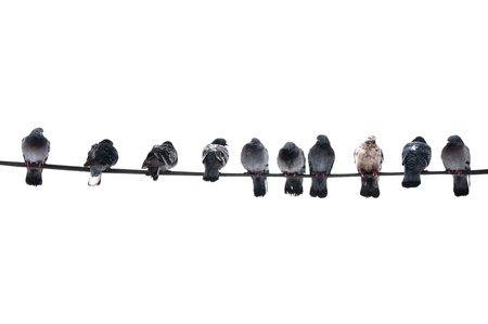 Pigeons on the wire Stock Photo - 10342660