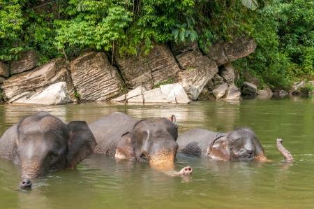 sumatra: Elephant Bath