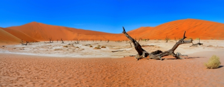 vlei: Naukuluft National Park - Dead Vlei Panorama