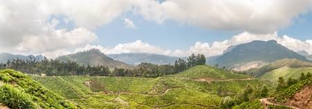 munnar: Tea Plantations in Munnar Panorama View Stock Photo