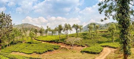 periyar: Panorama View at The Tea Plantations - Periyar