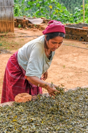 fermentation: Drying and Fermentation of Tea - Myanmar