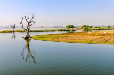 th�?¨: �rboles en Tuang Tha Nan Inn Lake - Amarapura