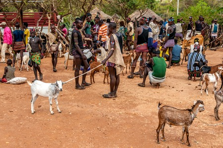 primarily: ALDUBA, ETHIOPIA - MARCH 18,2014 - The Banna are Muslim shepherds living in the highlands of southwest Ethiopia  They are primarily located in the Gemu Gofa province, which is east of the Omo River and north of Lake Turkana