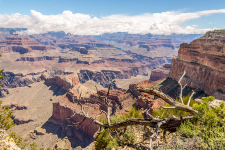 mohave: Grand Canyon North Rim View from Mohave Point