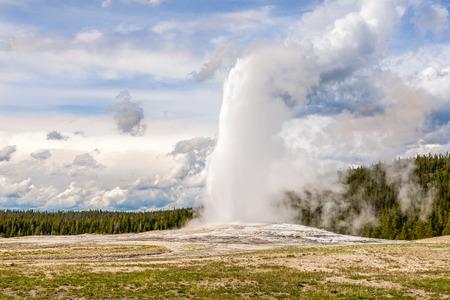 faithful: Geyser Old Faithful in Yellowstone National Park