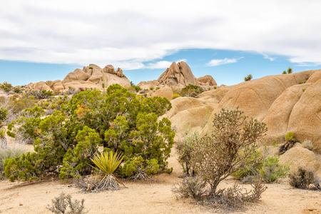 jumbo: Jumbo Rocks formation in the Joshua Tree National Park