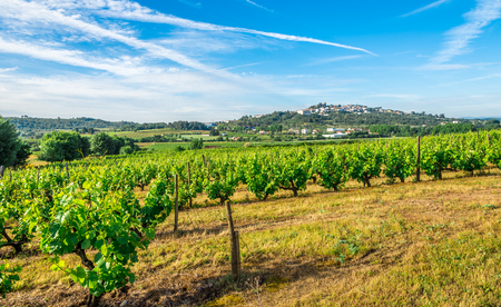 Countryside with Vine Grape scrubs near Belmonte town in Portugal
