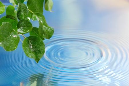 Groene bladeren over water met rimpelingen achtergrond