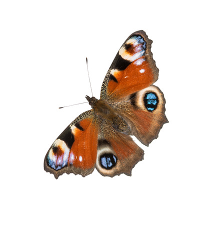 inachis: European Peacock butterfly (Inachis io), white isolated Stock Photo