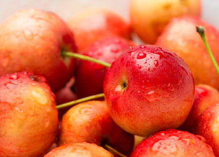 Close-up of wild cherries, Prunus avium, sweet and tasty, with water drops.