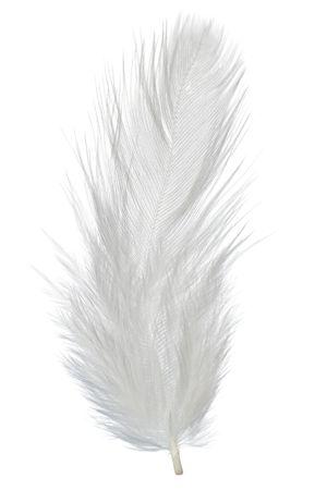 feather white: penna su bianco