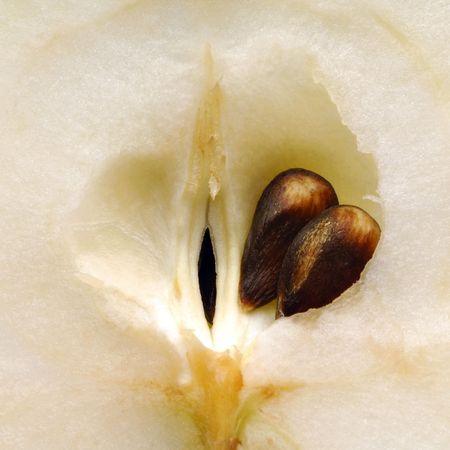 ovule: apple seed