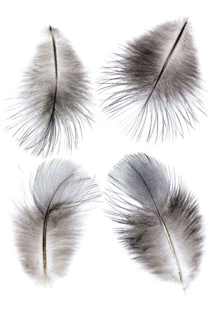 four feathers on white background