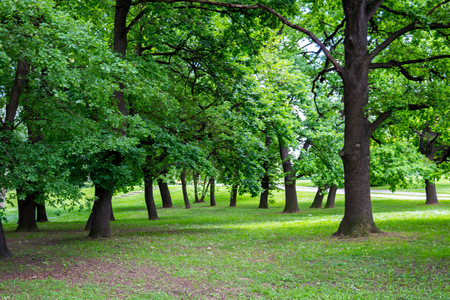 Green oasis on Lake Ada in Belgrade
