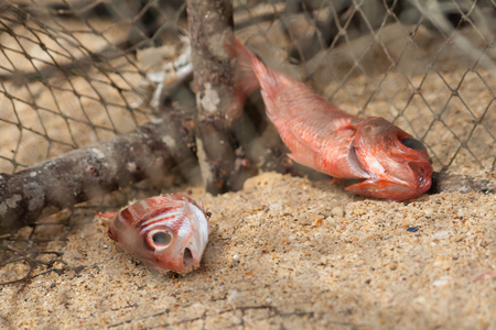 poacher: Fishes at trap Stock Photo