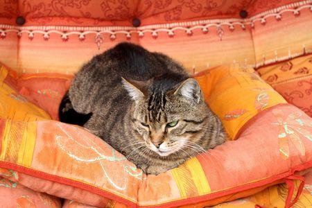 old cat Franky