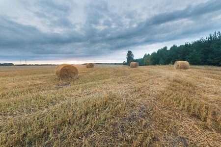 stubble field: late summer landscape with straw bales on stubble field