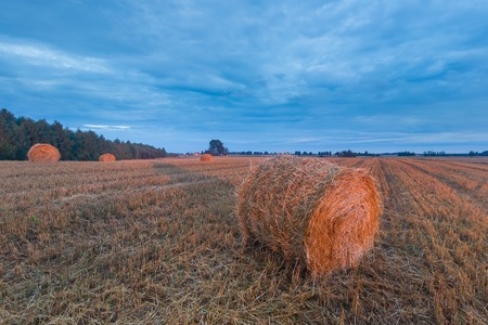 late summer landscape with straw bales on stubble field photo