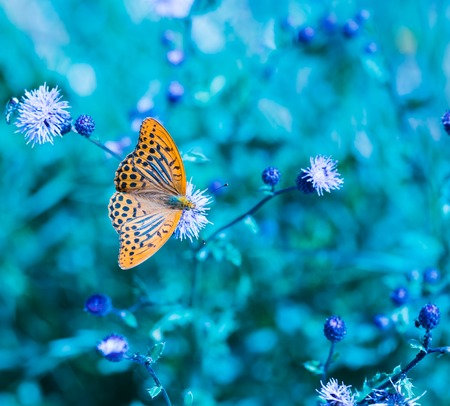 Beutiful butterly macro photo