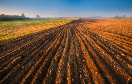plowed field: Sunrise over plowed field