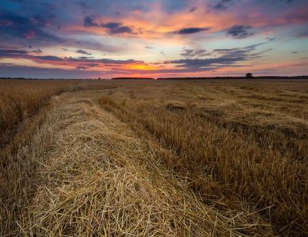 stubble field: Stubble field at late summer