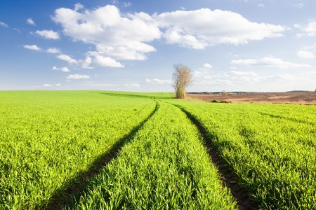 non cultivated: Beautiful landscape with young green field photographed during late spring Stock Photo
