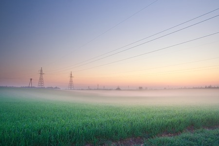 Power lines on field in morning fog