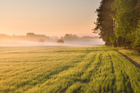 agricultura: ma�ana de niebla en la pradera. paisaje rural verano