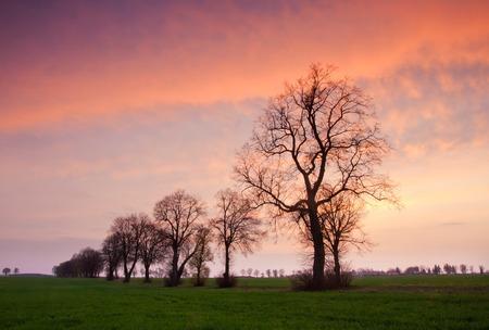 Beautiful sunset with dramatic sky on field or meadow Zdjęcie Seryjne - 37471709