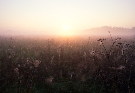 mistige ochtend op de weide. landelijke zomer landschap Stockfoto