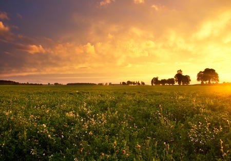 on field: Beautiful sunset with dramatic sky on field or meadow Stock Photo