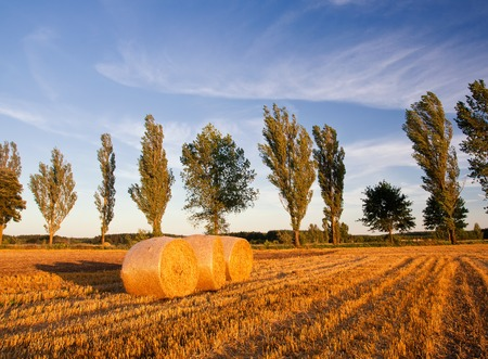 stubble field: Stubble field in sunset light with straw bales